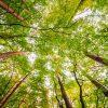 sylvotherapie-arbres-guerissent