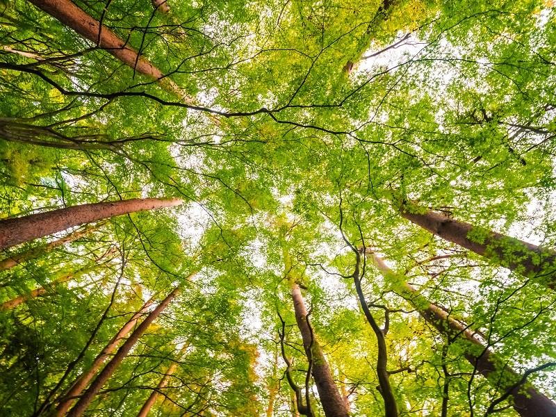 La sylvothérapie – Une reconnexion à la nature
